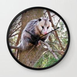 Possum on a Branch Wall Clock