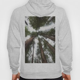 Redwood Portal - nature photography Hoody