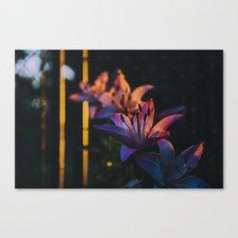 Golden hour flowers Canvas Print