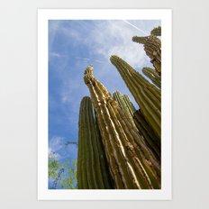 Tall Saguaro Cacti Art Print