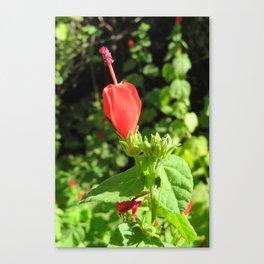 Arboretum Flower- Color Canvas Print
