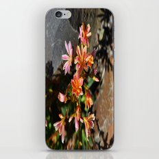 Orange Flowers iPhone & iPod Skin