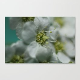 white one Canvas Print