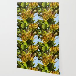 Parry's Agave Blooms Wallpaper