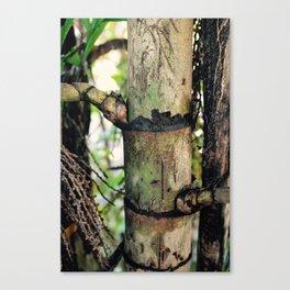 Palm Trunk Canvas Print