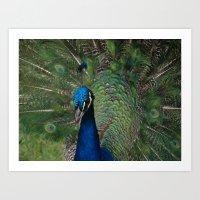 Pasadena Peacock Art Print