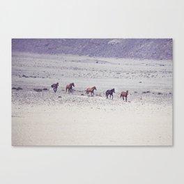 Wild Horses of Namibia Canvas Print