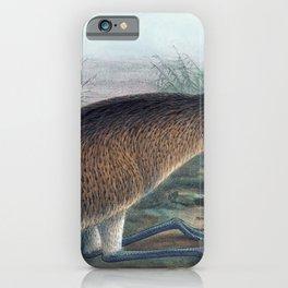 Vintage Print - The Birds of Australia (1910) - Tasmanian Emu iPhone Case