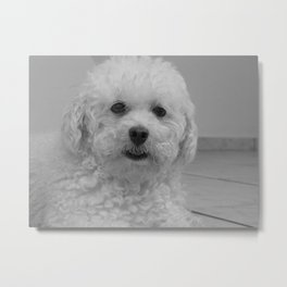 Why are you staring at me?  Metal Print