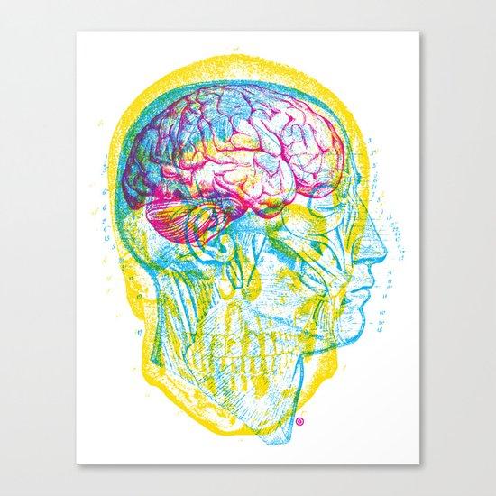 Anatomy Skull Canvas Print