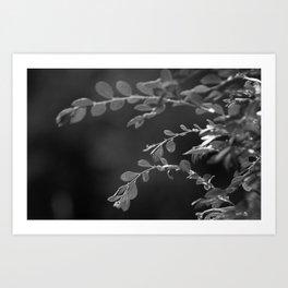 A Random Ass Plant In Black And White Art Print