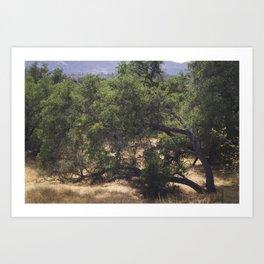 Tree Growing Sideways Art Print