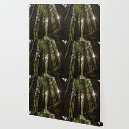 Redwoods Make Me Smile - Nature Photography Wallpaper