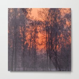 Winter Scene - Frosty Trees Against The Sunset #decor #society6 #homedecor Metal Print