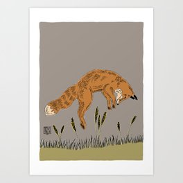 """""""Leaping Fox"""" a red fox leaps after a prey at a field in a late summer fog Art Print"""