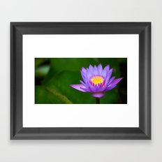water lily 2x1 Framed Art Print