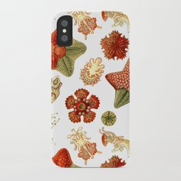 Sea Stars And Star Fish iPhone Case