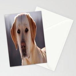 Portrait of A Golden Labrador Retriever Stationery Cards