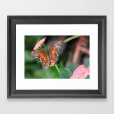 Butterfly On a Pink Flower Framed Art Print