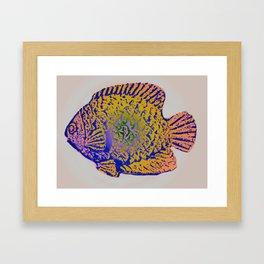 Sunfish Colors 2 Framed Art Print