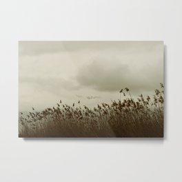 Windy Reeds Metal Print
