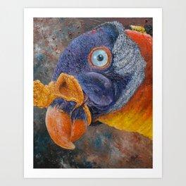 King Vulture (Sarcoramphus papa) Art Print