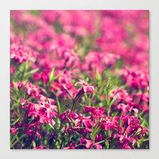 Through the Pink Canvas Print