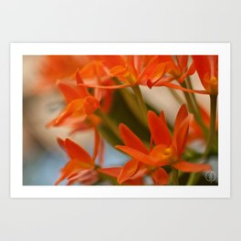 Orange Orchid  Art Print