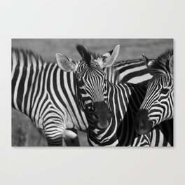 Zimbabwean Zebras Canvas Print