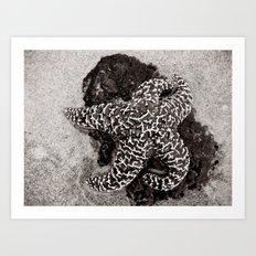 Starbright Art Print