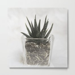 sweet cactus 3 Metal Print