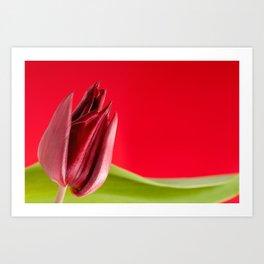 Decorative single red tulip Art Print