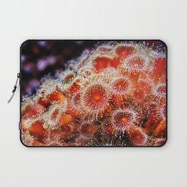 Strawberry Anemone Laptop Sleeve
