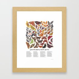 Saturniid Moths of North America Framed Art Print