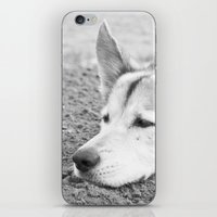 husky iPhone & iPod Skins featuring husky by MrBdigital