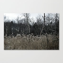 Darkened Field Canvas Print