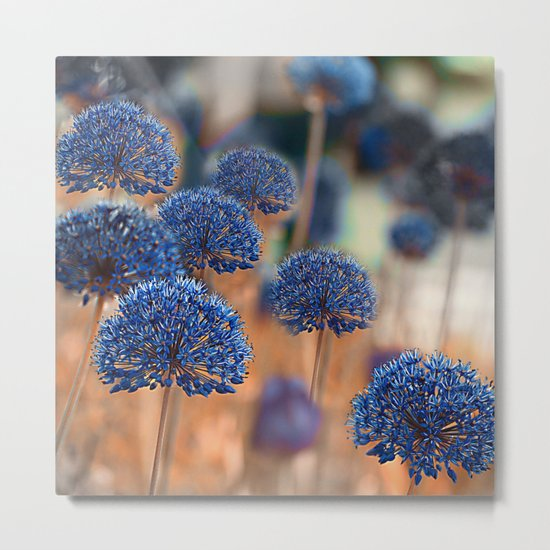 Blue ball flowers. Metal Print
