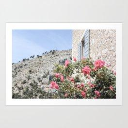 Blooming pink roses on the island of Brac in Croatia Art Print