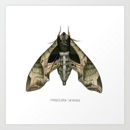 Pandora Sphinx Art Print