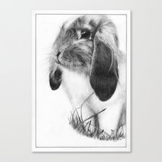 Ralph the Rabbit Canvas Print