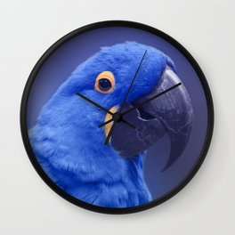 Blue Hyacinth Macaw - Anodorhynchus hyacinthinus - Puohokamoa Hoolawa Maui Hawaii Wall Clock