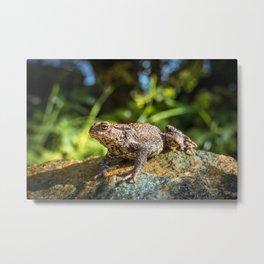 Amphibian, Common British Toad / Frog Metal Print