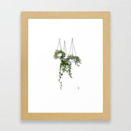 Hanging Plants Framed Art Print