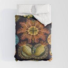 Ernst-haeckel-Ascidiae Comforters