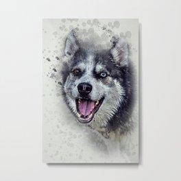 Beautiful husky Metal Print