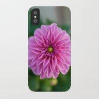 dahlia iPhone & iPod Cases featuring Dahlia by Katie Kirkland