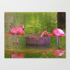 Pink times 2 Canvas Print