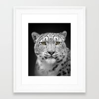 snow leopard Framed Art Prints featuring Snow Leopard by Linsey Williams Art