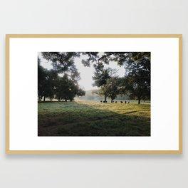 Through The Morning Framed Art Print