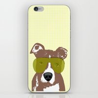 pit bull iPhone & iPod Skins featuring American Pit Bull Terrier by ialbert